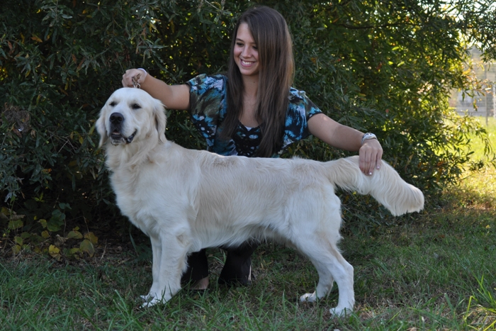 English Cream Golden Retriever Breeders - Tramin Tangerine Dream