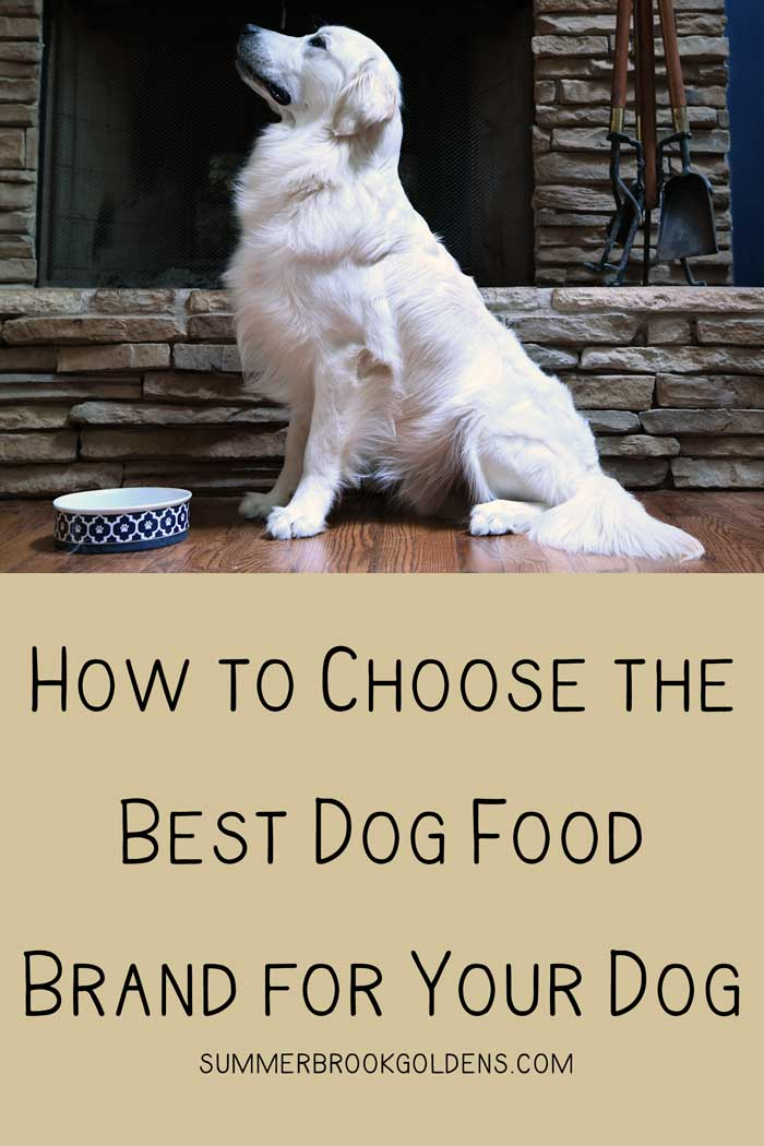 How to Choose the Best Dog Food Brand for Your Dog