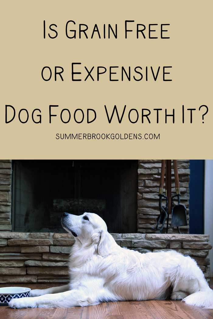 Are Grain Free or Expensive Dog Foods Worth It?