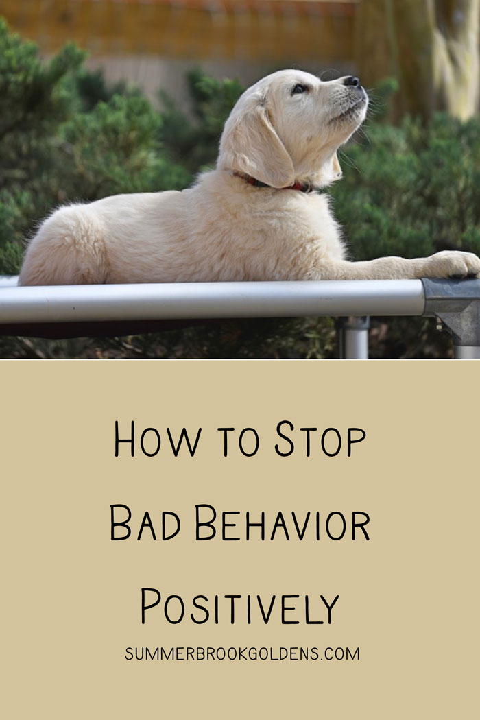 How to Stop Bad Behaviors Positively