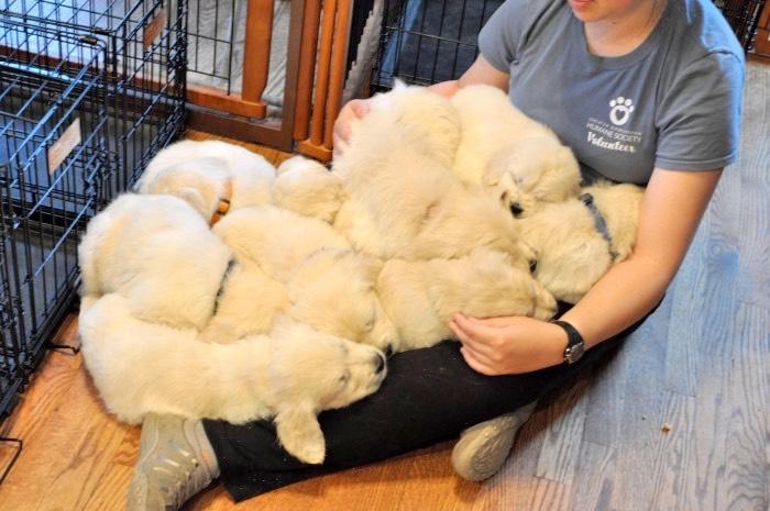 Raising Puppies