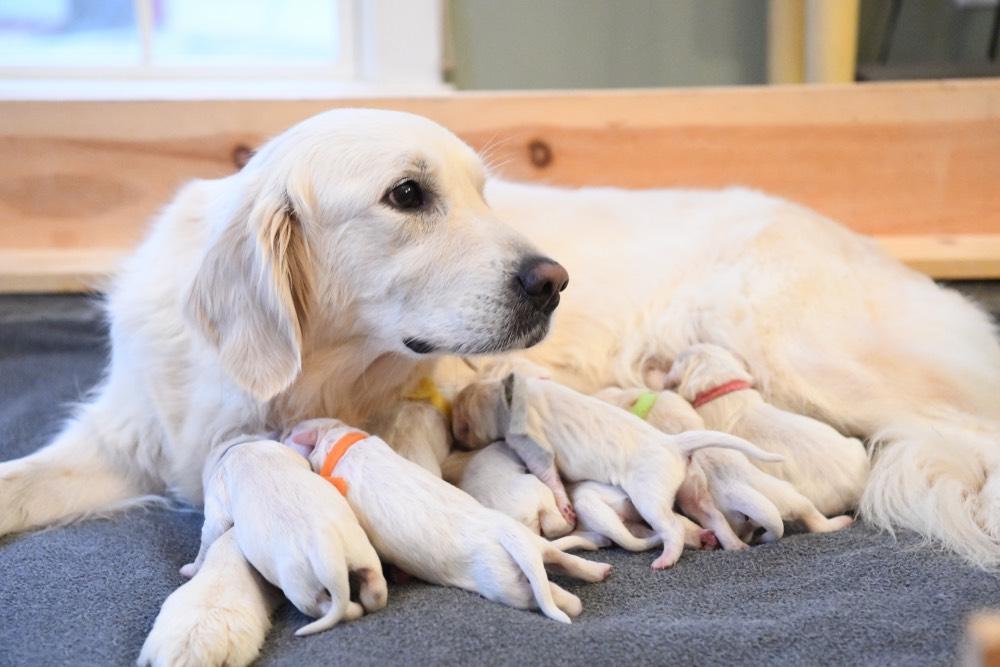 Tara and newborn puppies
