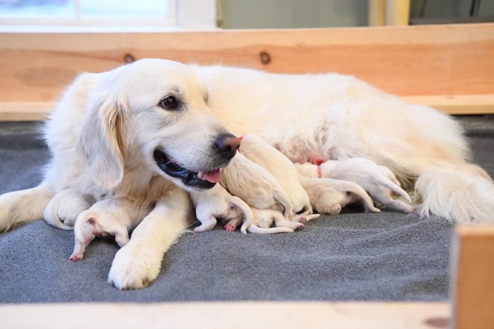 Tara smiling with newborn puppies