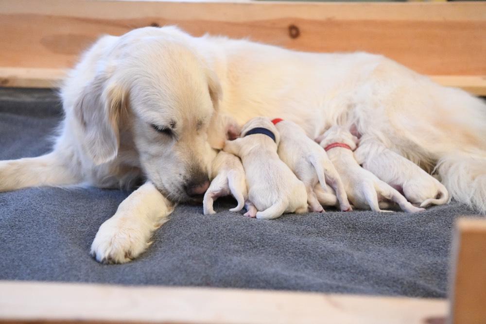 Tara loves her newborn puppies