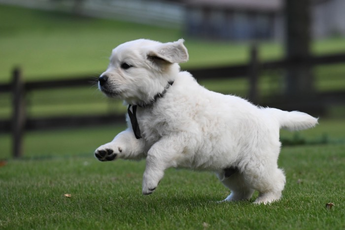 Exercising a puppy