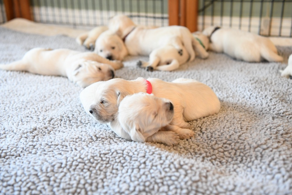 Eva's 2 week old pups
