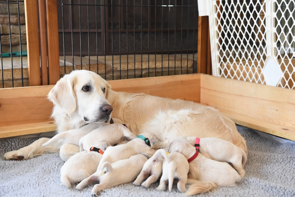 Eva and her 1 week old puppies