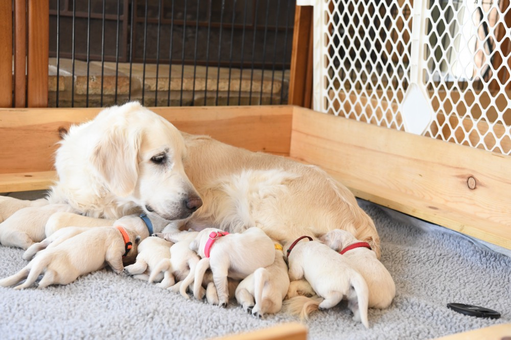 Eva looking at 1 week old puppies