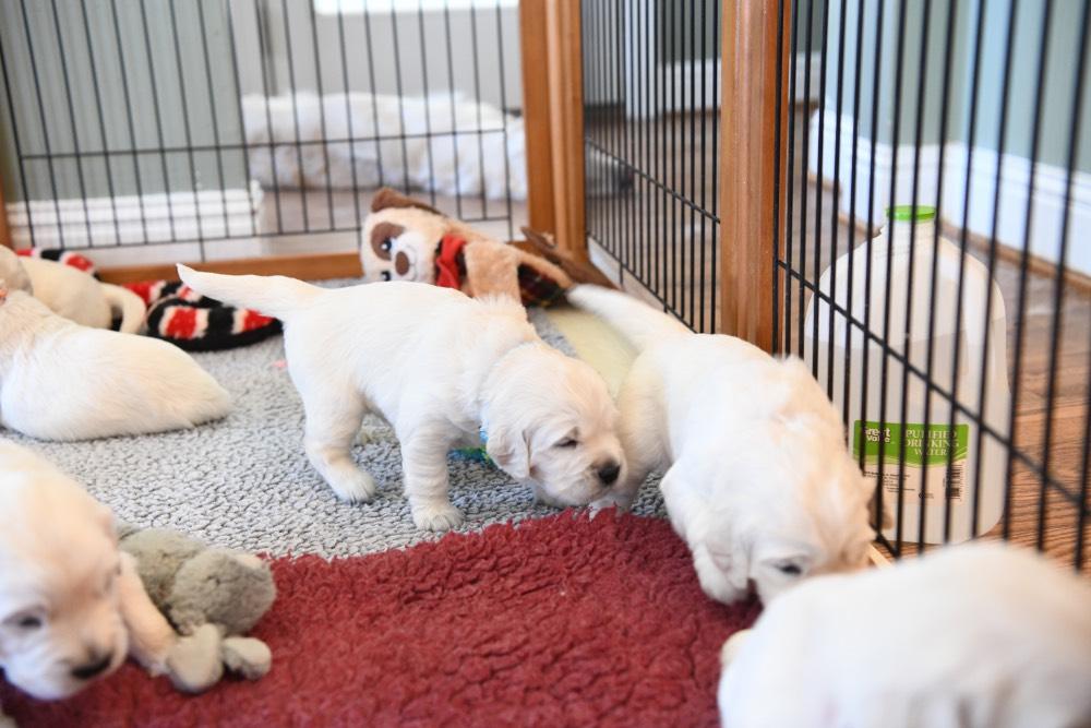 a 3 week old puppy