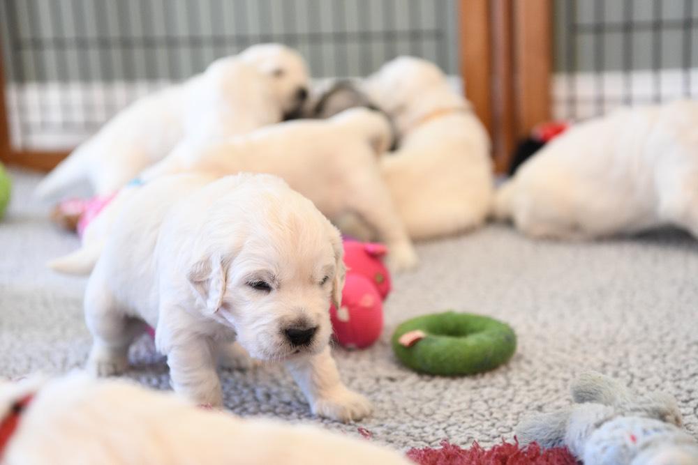 A Molly puppy