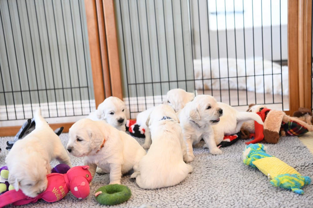 molly's litter at 3 weeks