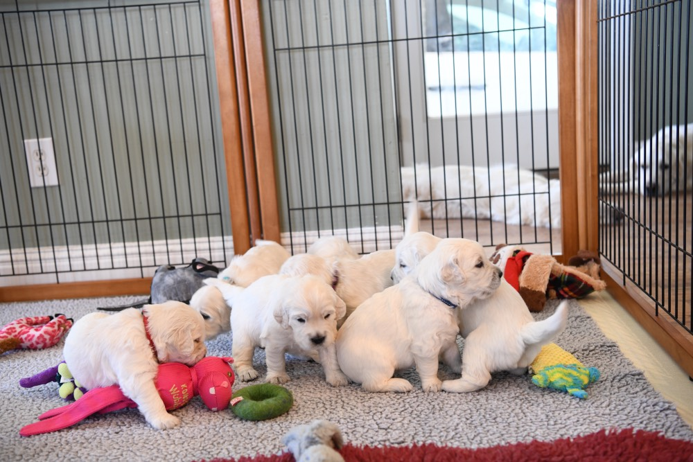 Molly's puppies playing