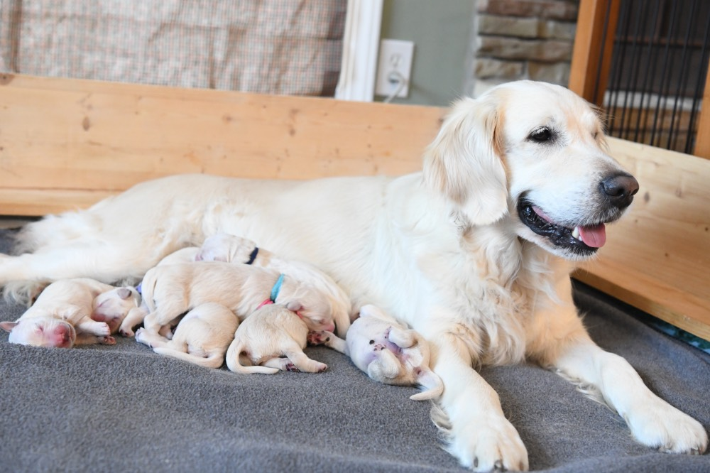 Piper smiling with newborn puppies