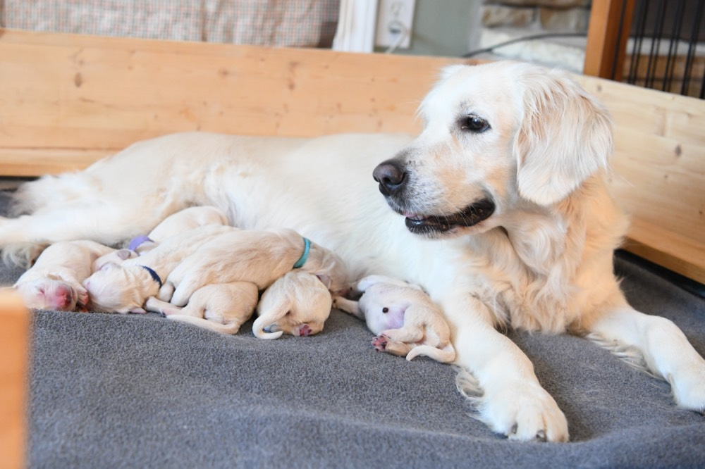 Piper with her newborn puppies