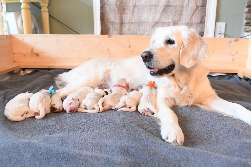 Piper and her puppies