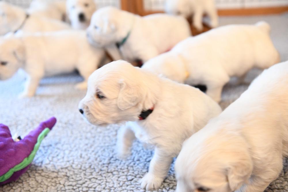Eva's three week old puppies