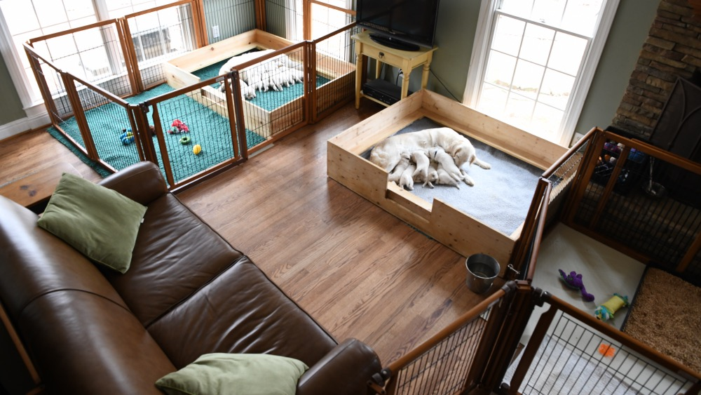 Tara and Piper's puppy areas in raising puppies
