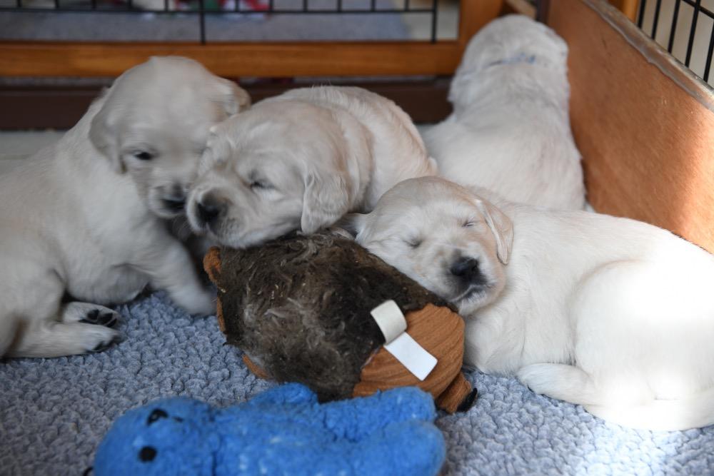 Piper's 3 week old puppies sleeping