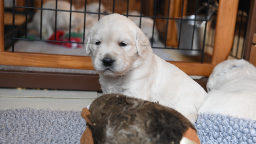 Piper's 3 week old puppy