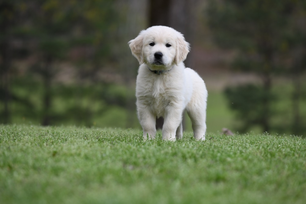 Piper's 6 Week Old Mr. RB