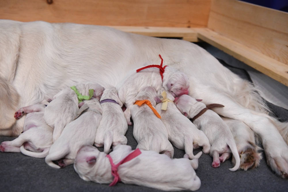 Piper's Newborns