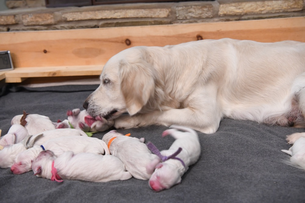 Piper's Newborn Puppies