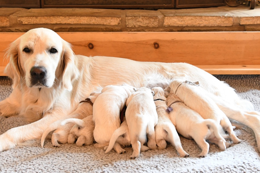 Piper with her 1 week old puppies
