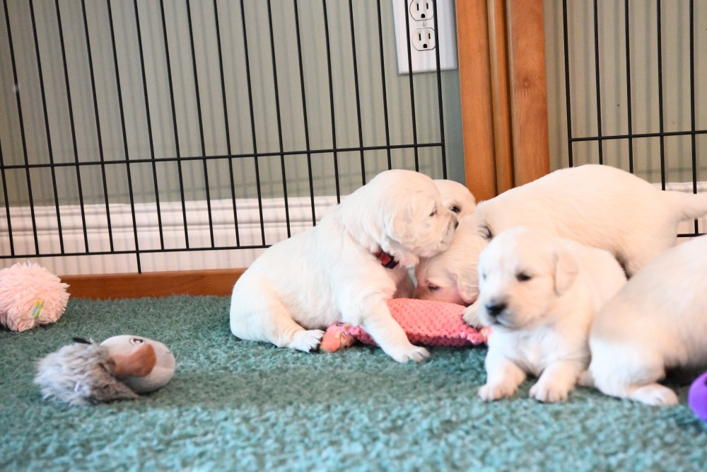 Piper's 3 week old pups