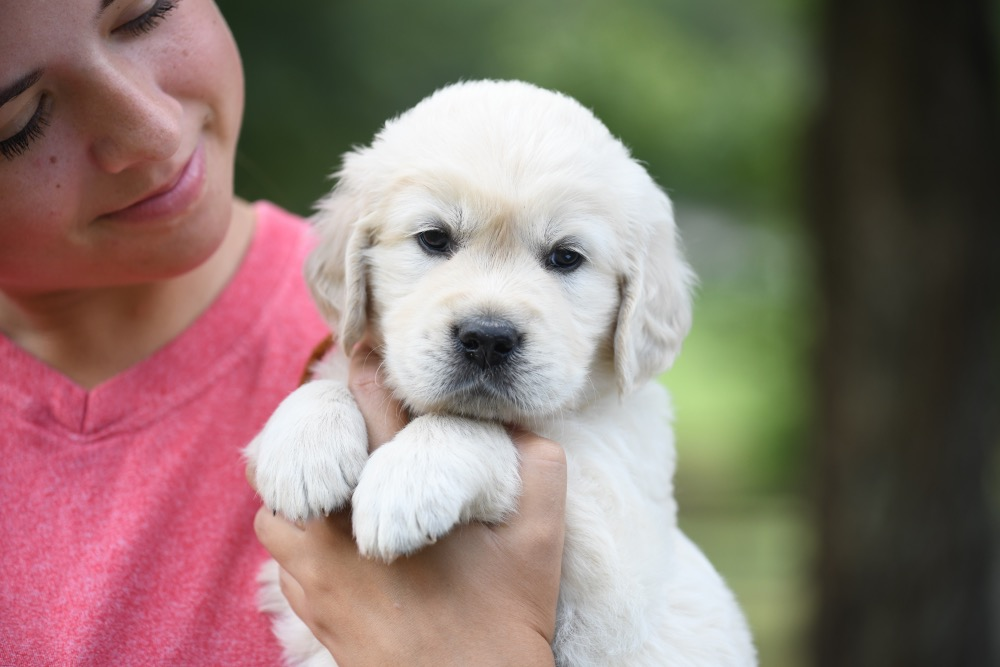 Piper's 5 week old puppies - Orange