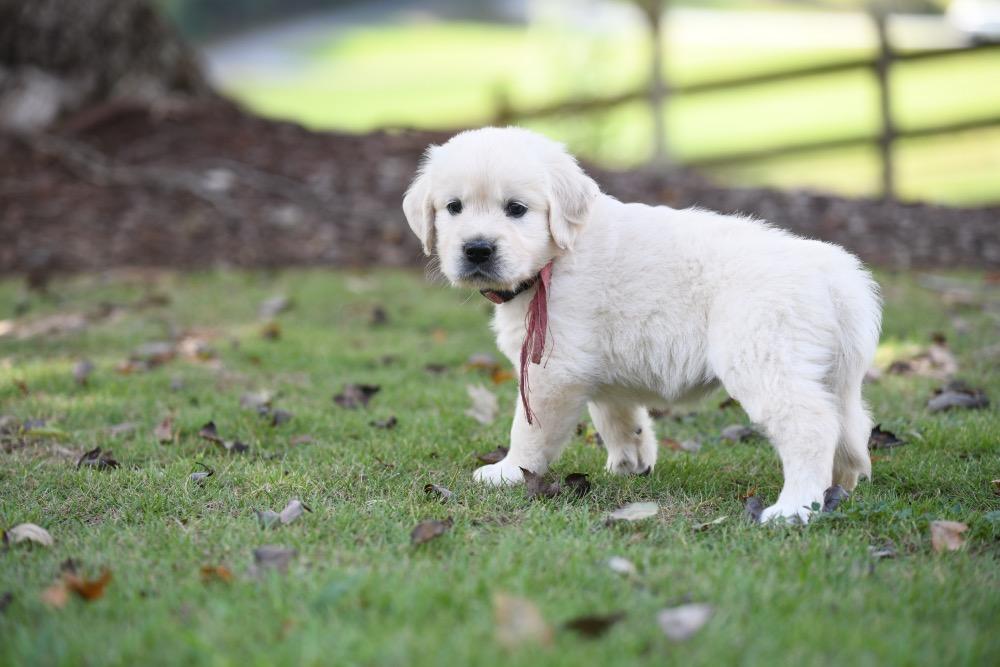Piper's 5 week old Miss Pink