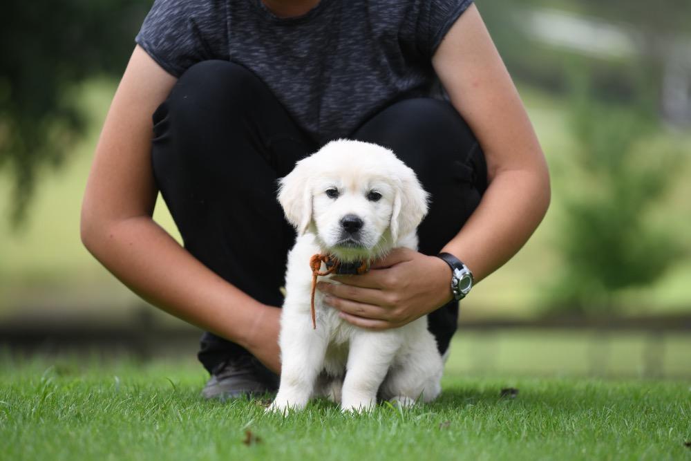 Piper's 6 Week Old Puppies - Mr. Orange