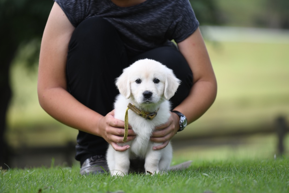 Piper's 6 1/2 Week Old Miss Yellow