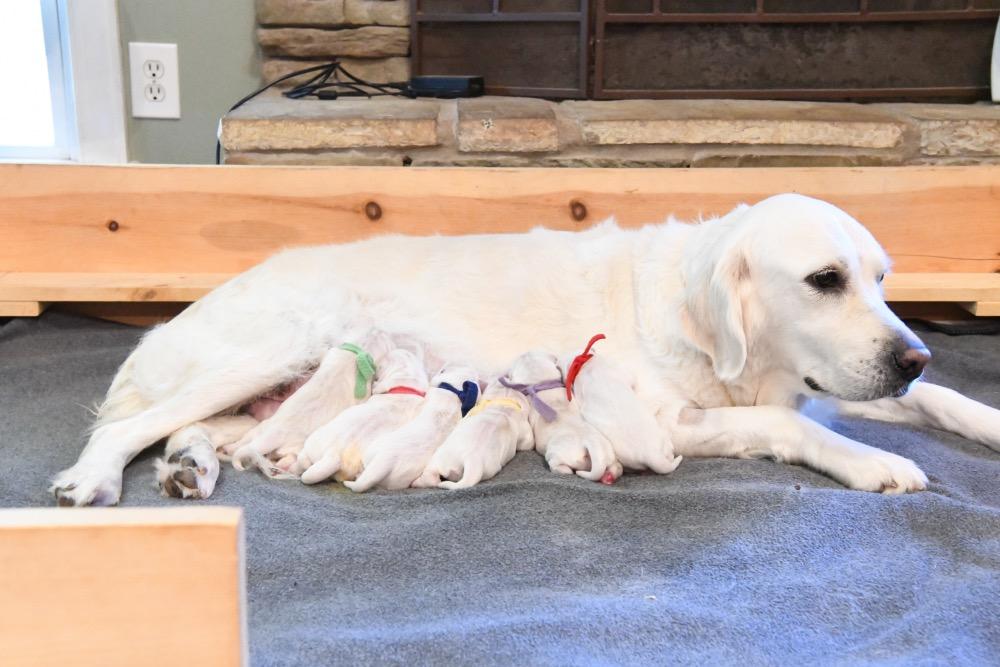 Molly's Newborn puppies