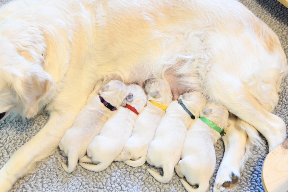 Molly's 1 week old puppies