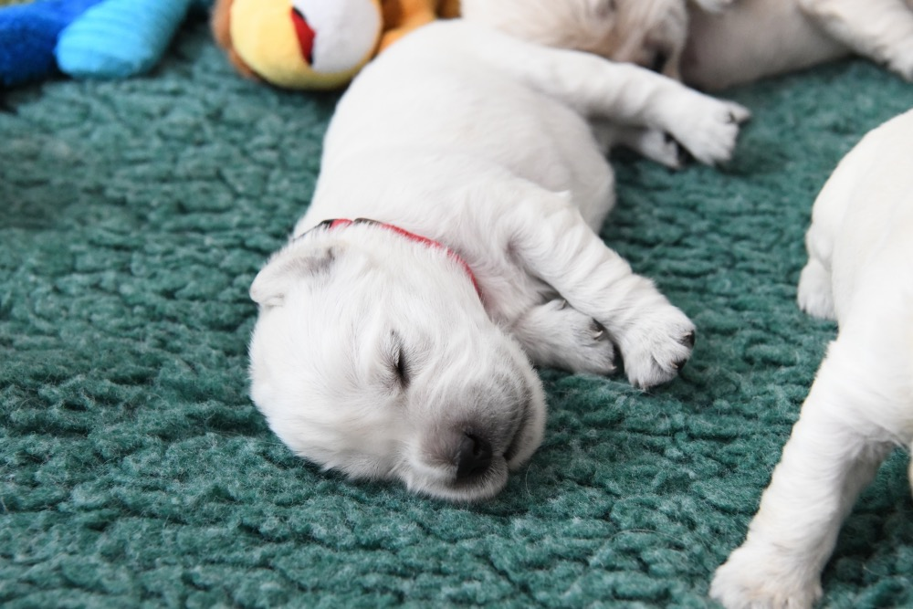Molly's 2 week old puppies