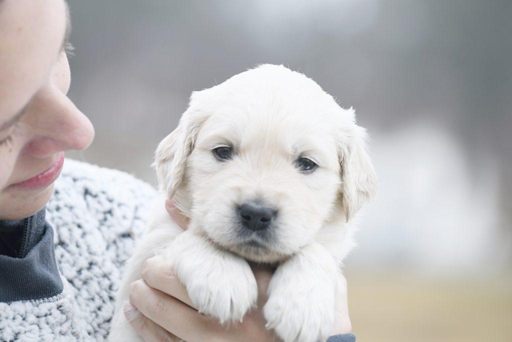Tara's 4 Week Old Puppies - Mr. Gray
