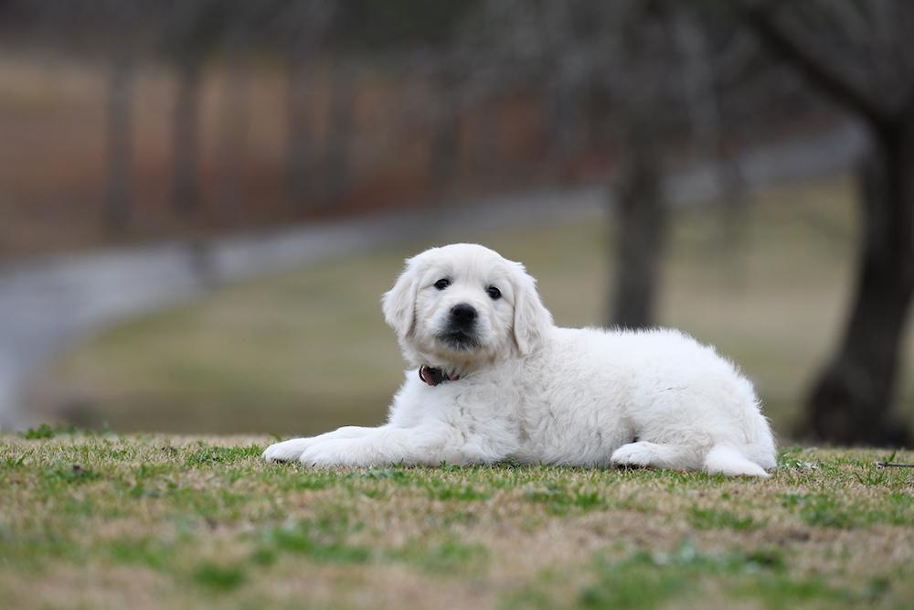 Tara's 6 1/2 week old puppies - Miss Pink