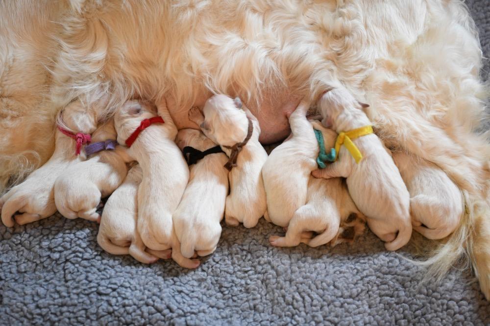 Eva's Newborn puppies