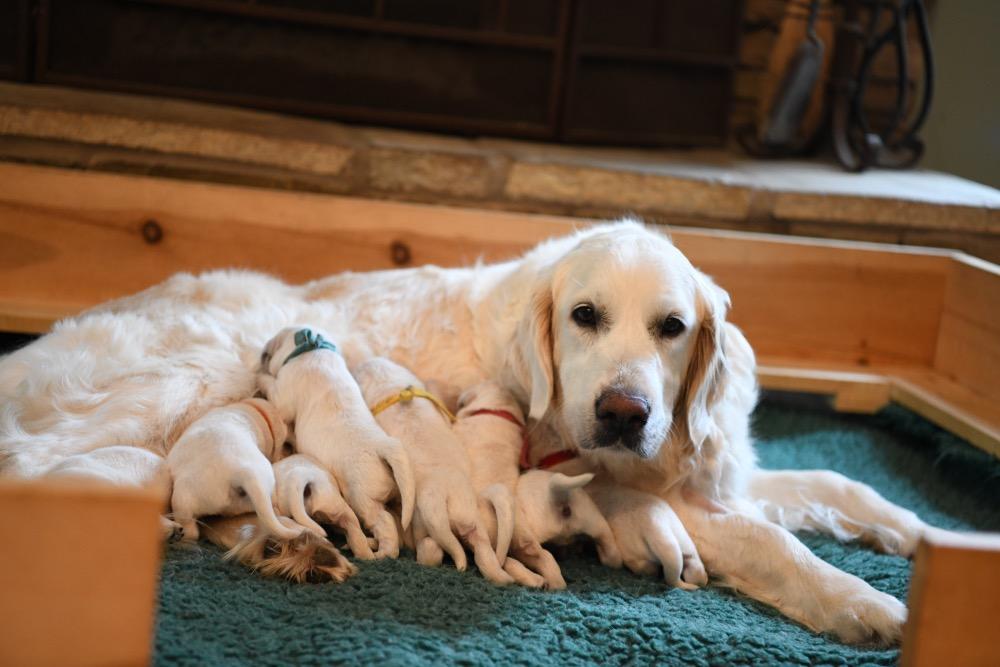 Eva's 1 Week Old Puppies