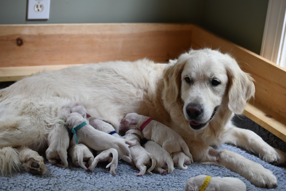Tara's newborn puppies